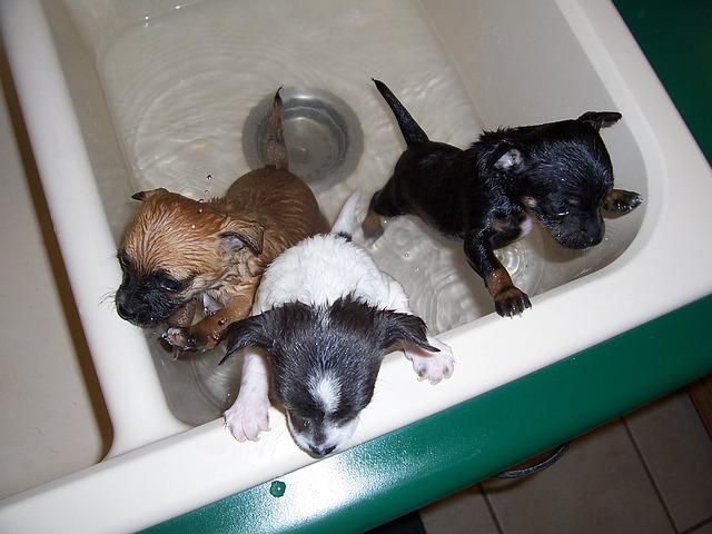 bath-time-1111748_640