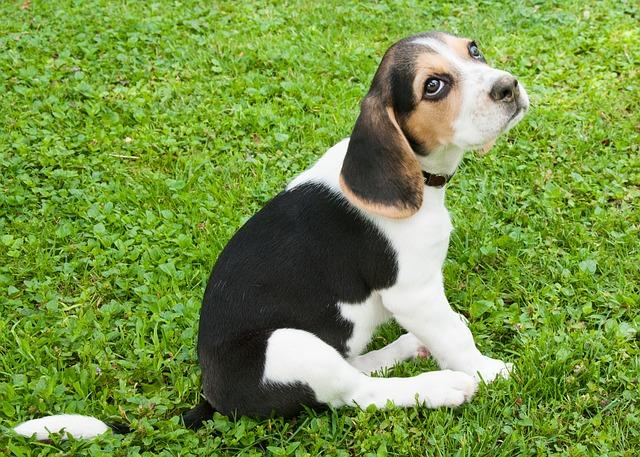 dog-888025_640